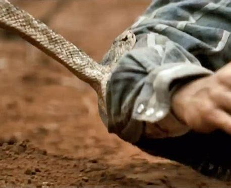 Grand Canyon Rattlesnake Facts and Pictures   Reptile Fact