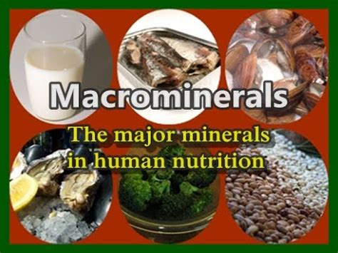 Macrominerals: The Seven Major Minerals of Human Nutrition