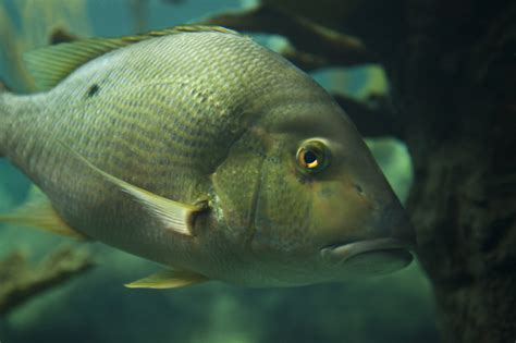 Side View of a Fish | ClipPix ETC: Educational Photos for