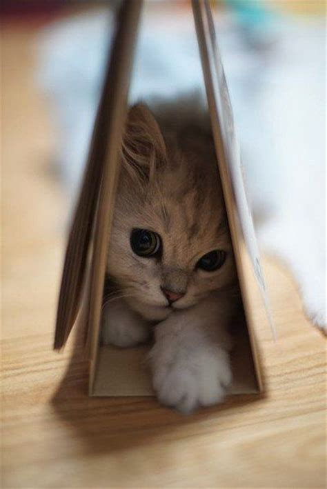 Shy Baby Kitten Pictures, Photos, and Images for Facebook