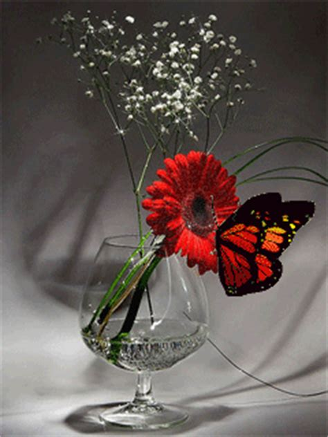 Butterfly On Gerber Daisy Pictures, Photos, and Images for
