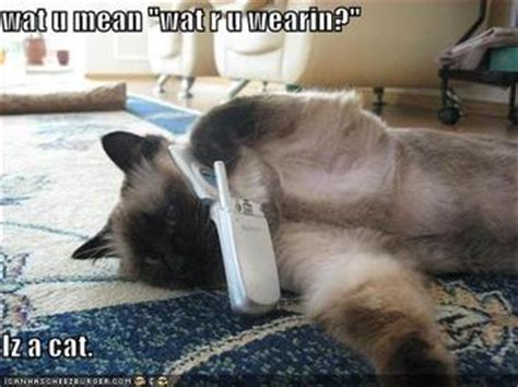 FUNNY PICZ: Funny Cats 3